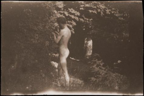 Bonnard examinant le feuillage d'un arbre (prise de vue de Marthe)